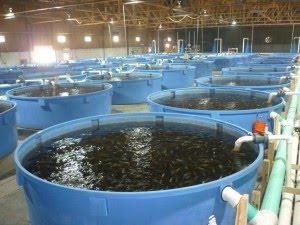 Criando peces en el desierto uruguay visi n mar tima for Peces para criar